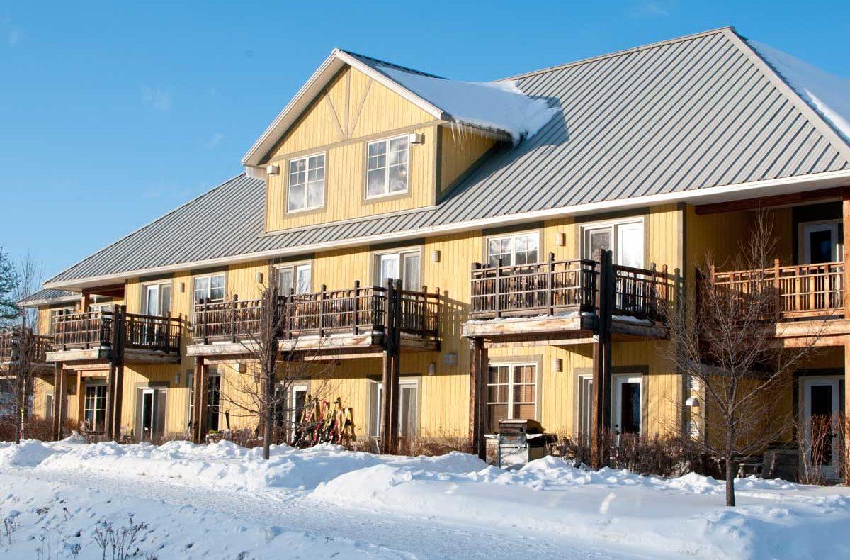 Cedars-in-winter-3